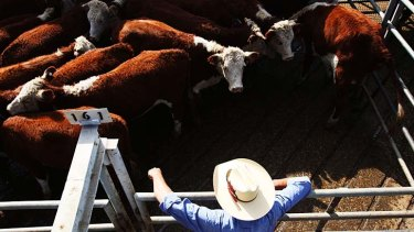 Claims of misused aid money: Millions of dollars in foreign aid will be channelled into the live export trade.