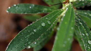 'Nanobionics' may one day give plants functions beyond turning carbon dioxide into oxygen.
