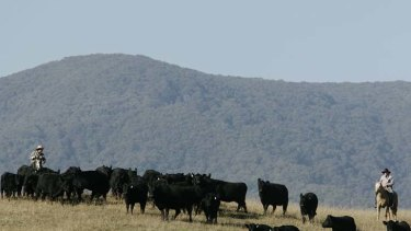 Parks Victoria warned the government that scientific, economic and social evidence did not support alpine grazing before the Coalition approved a trial.