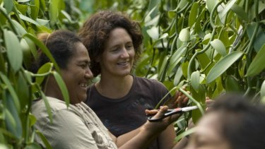 Heilala Vanilla's sales and marketing manager, Jennifer Boggiss (back), inspects the crop with other plantation workers.