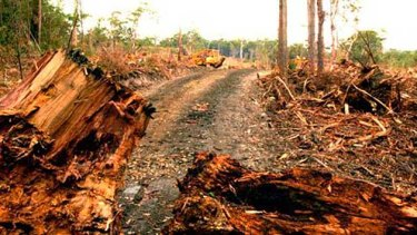 Destruction ... the damage caused by logging in Tasmania.