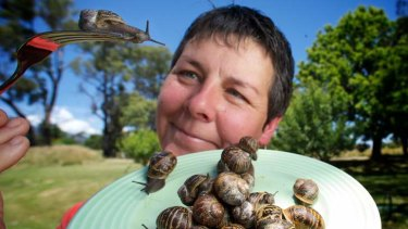 Yarra Valley Snails' Robyn Schrader with some of the snails from her Taggerty farm.