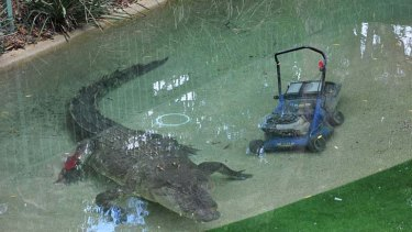 Not his ... Elvis the crocodile stole the lawnmower.