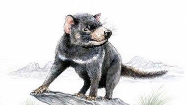 Tasmanian devil. (Illustration by Joe Benke.)