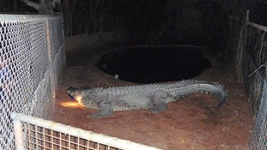 Offended by the late night intruder ... Broome crocodile Fatso.