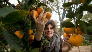 Nikki Valentini picks fruit at Hallstead Farm, near Castlemaine.