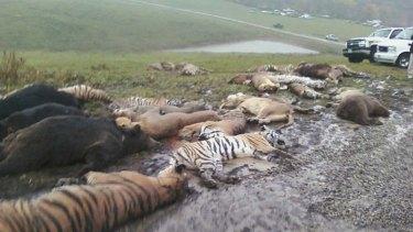 Carcasses  at the Muskingum County Animal Farm  in Zanesville, Ohio.