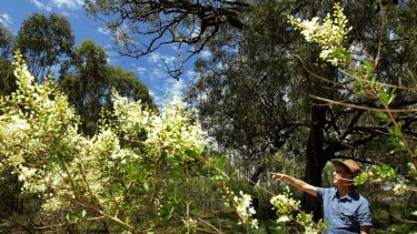 ''There are all of these threats all the time'' … Brett Summerell, from the Australian Botanic Garden, believes PlantBank is a vitally important new project.