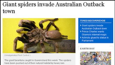 How the eastern tarantula story appeared in the Times Online this week.