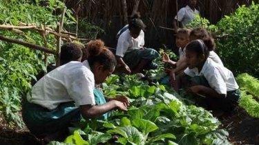 Diversifying crops in Vanuatu.