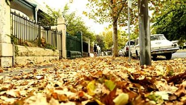 Trees drop leaves after last week's heatwave brings an early autumn to Melbourne.