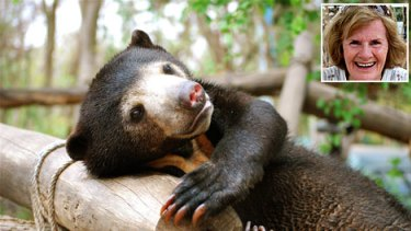Sanctuary ... a rescued sun bear at Phnom Tamao Wildlife Rescue Centre and Mary Hutton (inset).