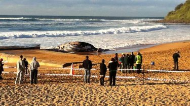 The dead whale is still drawing a crowd this morning.
