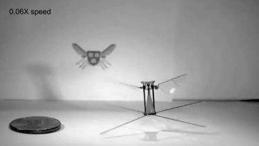 RoboBee in flight.