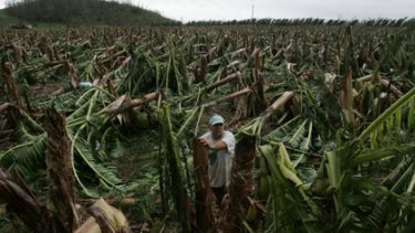 Innisfail banana farmer Lawrence Collega after the destruction of Cyclone Larry in 2006. Photo: Andrew Taylor