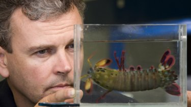 Professor Justin Marshall from the UQ School of Biomedical Sciences with a Mantis shrimp.