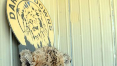 Darling Downs Zoo owners say they won't sell lion cubs to a travelling circus.