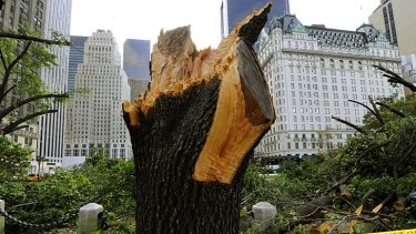 Destroyed ... as many as 1000 trees might be lost in Central Park.