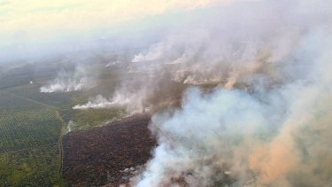 Clearance: Fires in the Tripa peat forest in Aceh. The destruction poses a new threat to rare orang-utans.