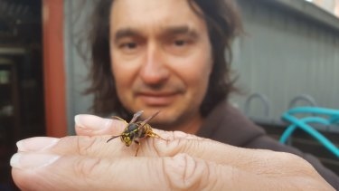 CoreEnviro Solutions Senior Pest and Weed Officer, Jim Bariesheff pictured with a queen wasp.