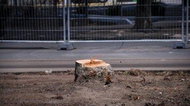 A stump left behind on Hoddle Street.