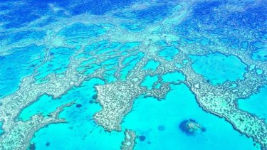 Hardy Reef, part of the larger Great Barrier Reef.