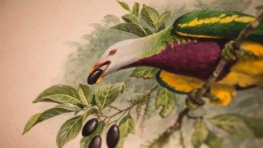 Wildlife filmmaker Sir David Attenborough described Cooper, as being one of the world's best bird artists.
