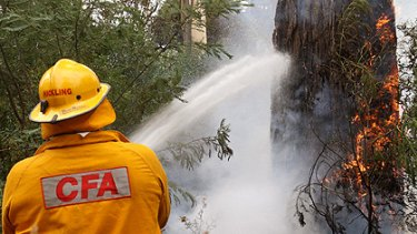 Firefighters work in the bush on the road to Kinglake.