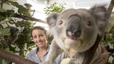 Ms Schultz has dedicated her time to making sure south-east Queensland koala's genetic diversity continues.