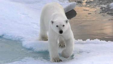 Arctic ice is in retreat.