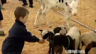 Nearly 50 people have contracted E-coli since an outbreak linked to the Ekka's animal nursery.