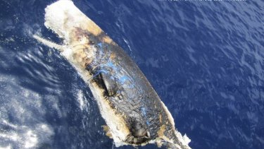 A dead sperm whale in the Gulf of Mexico