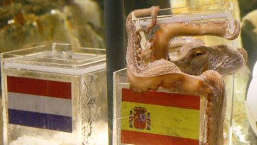 "Viva Espana ... ""psychic"" octopus Paul picks Spain to win over the Netherlands."