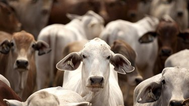 Cattle exports.