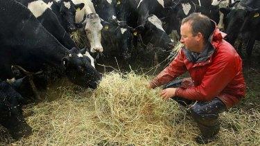 Nick Renyard feeds his cows.