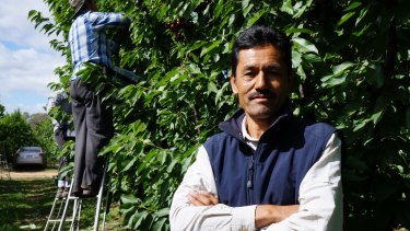 Nabi Baqiri in the Shepparton orchard where he employs scores of refugees and backpackers.