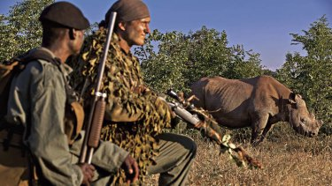 Game for anything … Mander and one of his soldiers watch over a rhino at Victoria Falls.