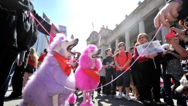 Paws for thought: Demonstrators in the city tell the state government what to do with puppy farms that produce animals for money in inhumane conditions.