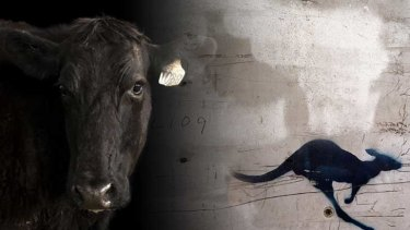 The worry of  wagyu ... compared to kangaroo, it may trigger inflammation, say researchers.