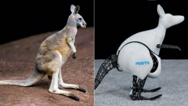 Robot: The bionic kangaroo recovers kinetic energy from each jump to store and use in the next hop.