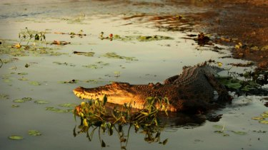Under attack: Who knows what's lurking in a watering hole?