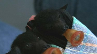 Two baby bats.