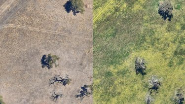 The images from 2015 show the difference in WA fields before and after winter rains.