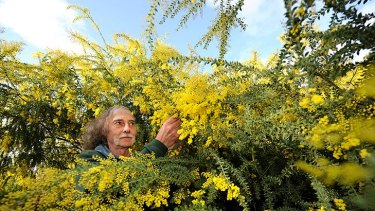 Bill Aitchison, of the Australian Plants Society, is not surprised by the controversy over the acacia name, given its iconic status in Africa and Australia.