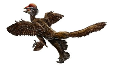 This undated image by Bristol University, England, shows a reconstruction image extrapolated from a feathered dinosaur fossil, called Anchiornis huxleyi, discovered in north-eastern China.