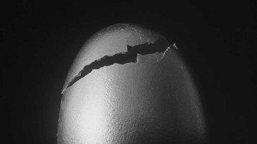 Cracking the problem of identifying free range and organic eggs.