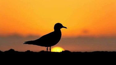 A lone seagull watching the sun rise over North Cronulla beach.