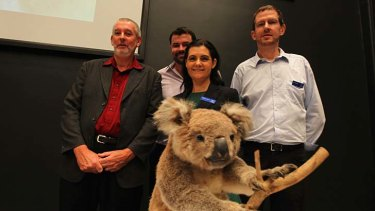 "Genetic win: Professor Peter Timms, far left, with Adam Polkinghorne, Dr Rebecca Johnson and Mark Eldridge, says it was ""only right"" his team won the global race to diagnose and treat diseases threatening to wipe out koalas."
