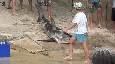Catch leads to court: The juvenile great white shark was slashed by the boat propeller and later bludgeoned.