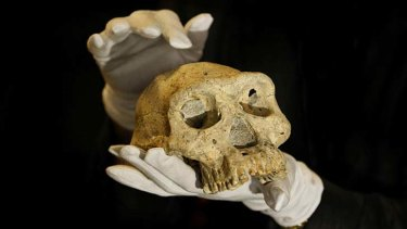 The discovery of a 1.8 million-year-old human ancestor, the most complete ancient hominid skull found to date, captures early human evolution on the move in a vivid snapshot and indicates our family tree may have fewer branches than originally thought, scientists say.